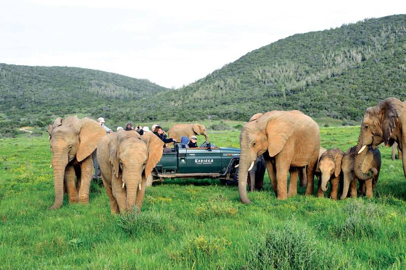 elephants_vehicle