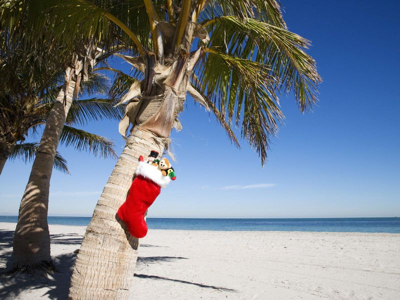 Christmas stocking with gifts hanging from palm tree